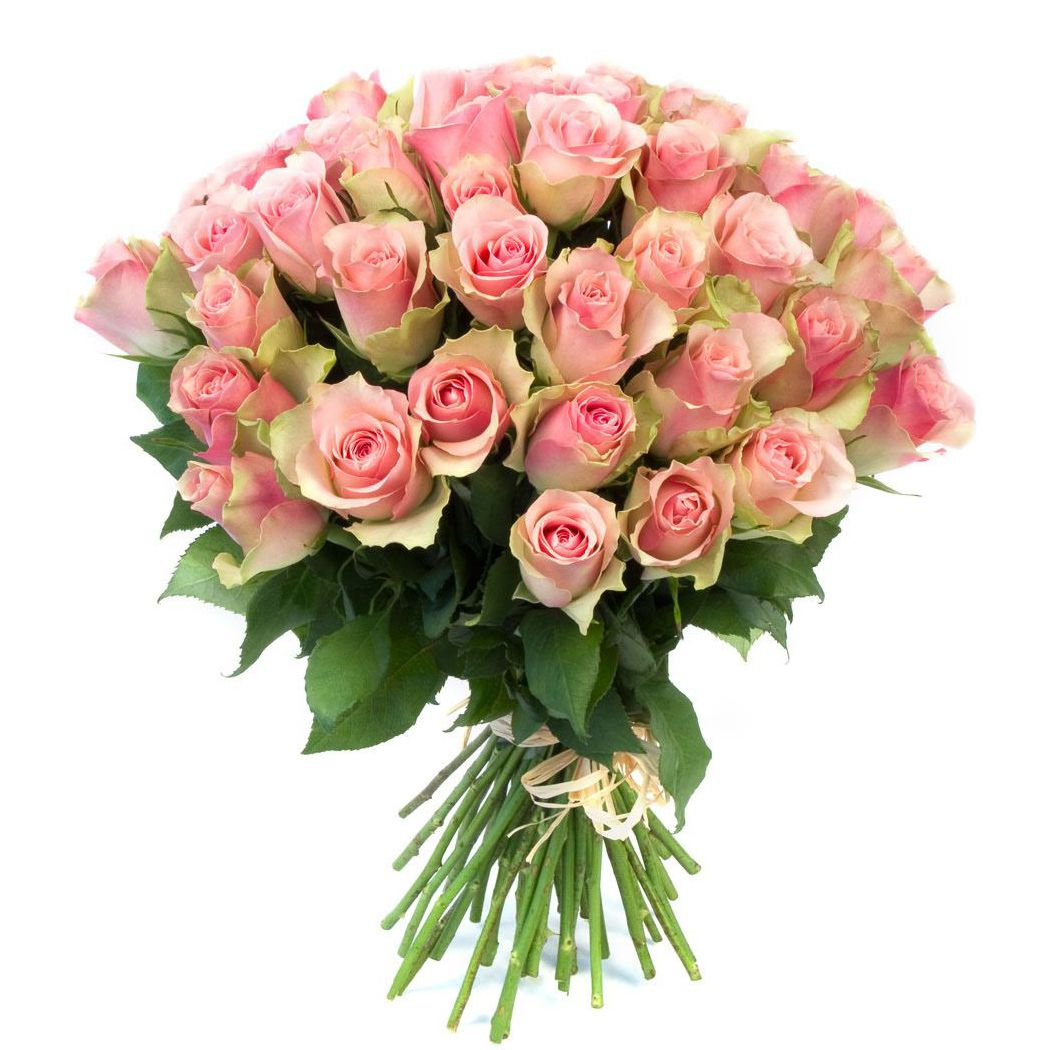 Цветы розы недорого