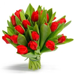 21_red_tulp